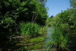 Semaine nature : 1000 lieux humides de la forêt du Rhin