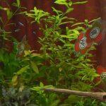 Décoration de l'aquarium pour les 50 ans
